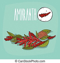 Set of isolated plant Amaranth flowers herb with leaves,...