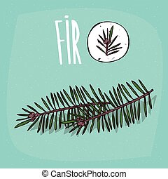 Set of isolated plant Fir leaves herb