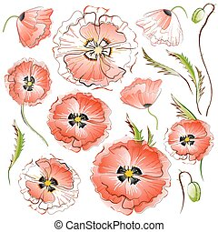 Set of isolated Red Poppy Flowers