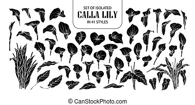 Set of isolated silhouette Calla lily in 41 styles. Cute hand drawn flower vector illustration in white outline and black plane.