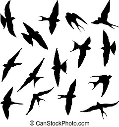 swallow - set of isolated swallow silhouettes