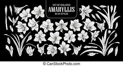 Set of isolated white silhouette Amaryllis or Hippeastrum in...