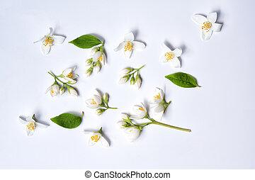 Set of jasmine flowers on white background