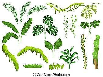 Set of jungle plants.