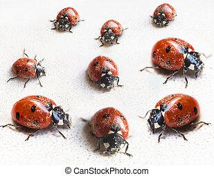set of ladybugs after hibernation in indoor