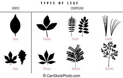 Set of Leaf types infographics. Silhouette Vector - Leaf ...