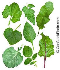 Set of leaf vegetables