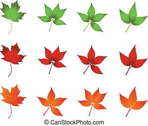 set of leaves