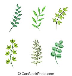 set of leaves in sketch style, vector illustration