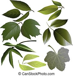 Set of leaves of such flowers as rose, mallow, paeonia, viburnum, apple, petunia, cherries