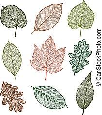 Set of leaves - Set of Vector linden, oak, nut, plane tree,...