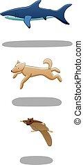 Set of levitating shark, dog and flying squirrel