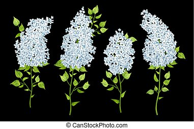 Set of Lilac Flowers