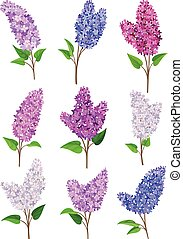Set of lilac flowers. Vector illustration on a white background.