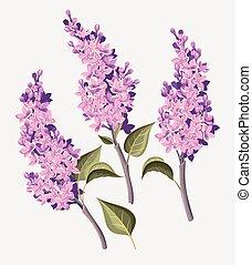 Set of lilac