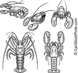 Set of lobster illustrations isolated on white background. Design elements for poster, menu. Vector illustration