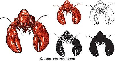 Set of lobster vector by hand drawing.
