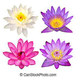 set of lotus flower isolated on white with clipping path