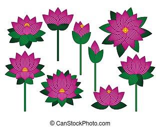 Set of lotus flowers.