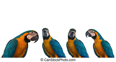 Set of Macaw Parrot on white background