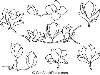 Set of magnolia isolated on white background. Hand drawn vector illustration, sketch.