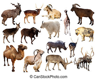 Set of  mammal animal over white background