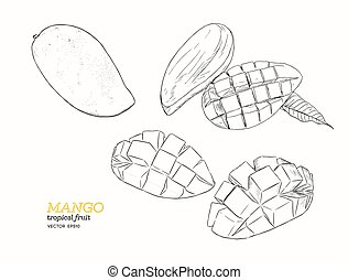 set of mangoes. hand draw sketch vector. - set of mangoes. ...