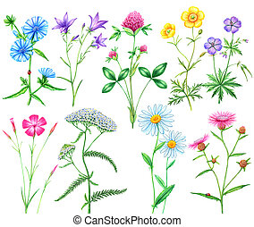 set of meadow flowers - Beautiful watercolor set meadow...