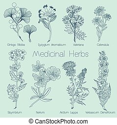 Set of Medical Herbs in vector