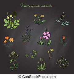 Vector set of medicinal plants, Hand drawn botanical illustration