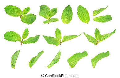 set of mint isolated on white background