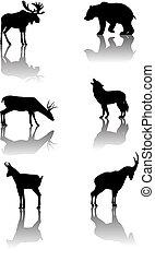 Six silhouettes with reflex of wildlife animals: moose, bear, deer, wolf, chamois, ibex