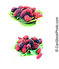 set of mulberry on white background