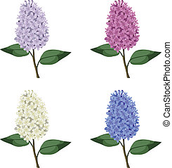 Set branches of multicolor lilac flowers with leaves