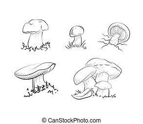 Set of mushrooms: champignon, porcini, greasers, suillellus...