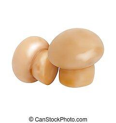 Set of Mushrooms. Vector illustration