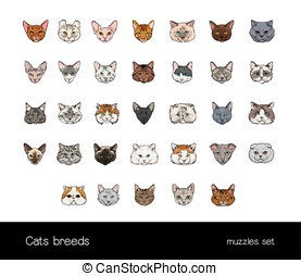 Set of muzzles different cats breeds. Big ollection of hand drawn colorful illustrations.