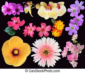 different tropical flowers