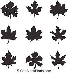 Set of nine Maple-leaf silhouette vector