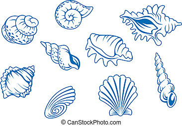 Set of ocean seashells isolated in white background