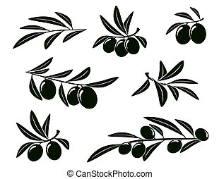 set of isolated olive branches on white background