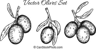 Set of olive tree branch. Hand drawn style. Vector sketch