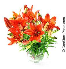 Set of  orange lilly. Summer flowers