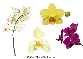 Set of orchid flower on a white background
