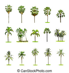 Set of palm and coconut trees on white background