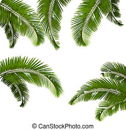 Set of palm leaves on white background. Vector illustration.