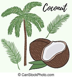 Set of palms, branches and coconuts. A whole and broken coconut. Palm branch and tree. Vector. Freehand drawing.