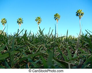 palms on the green field
