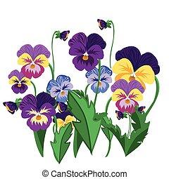 Set of pansy flowers violet bloom garden plant vector illustration.