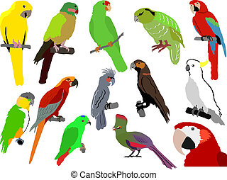 set of parrots